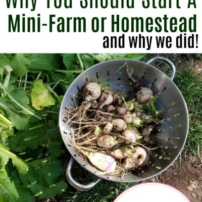 Why You Should Start A Mini-Farm or Homestead