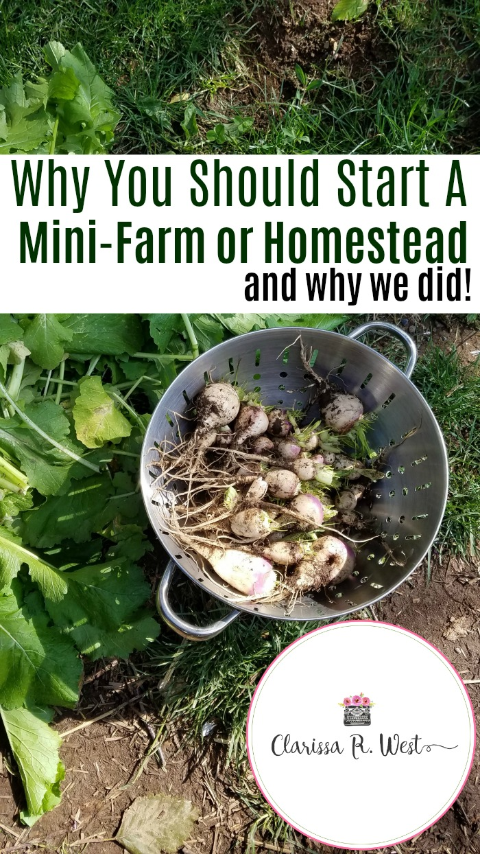 Why You Should Start A Mini-Farm or Homestead