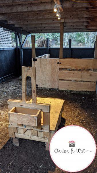 sheep milk stand in milk barn
